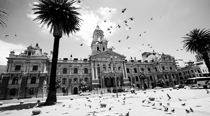 pigeons flying over city hall of cape town at daylight view